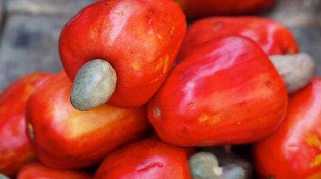 Kaju, Kaju Elması Denilen Meyvenin Sap Kısmında Oluşmaktadır..